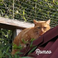 Romeo, Chat à adopter