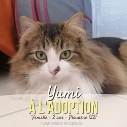 Yumi, Chat à adopter