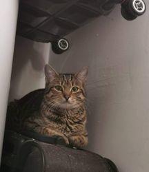 Oscar, Chat à adopter