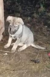 Stella, Chiot à adopter
