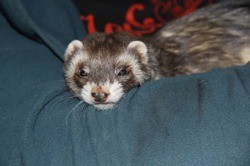 Spoutnik, Animal à adopter