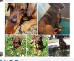 Mika, Chiot à adopter