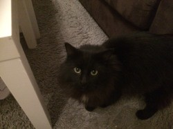 Michko, Chat à adopter