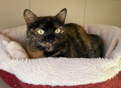 Canelle, Chat à adopter