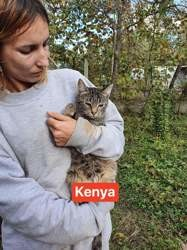 Kenya, Chat à adopter