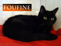 Foufine très gentille, Chat à adopter