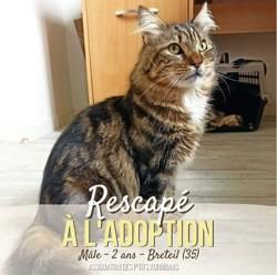 Rescapé, Chat à adopter