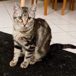 Winky, Chat à adopter