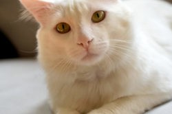 Snow, Chat à adopter