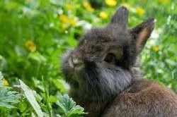 Oriflamme, Animal européen à adopter