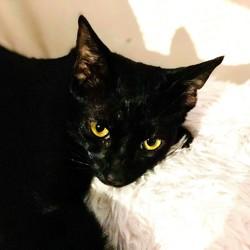 Guapo, Chat européen à adopter