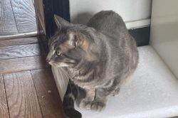 Zébra, Chat à adopter