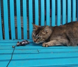 Mystic, Chat à adopter