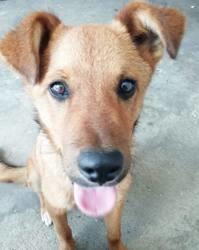 Mahot (réservé), Chiot à adopter