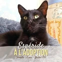 Espéride, Chat à adopter