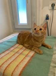 Avril, Chat à adopter