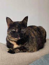 Nalia, Chat à adopter