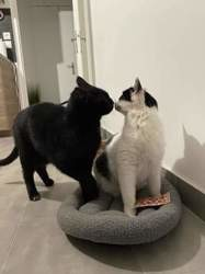 Max et lea, Chat à adopter