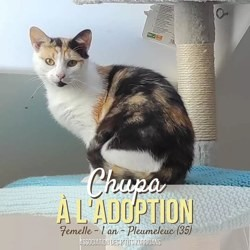 Chupa, Chaton à adopter