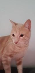 Armani, Chat à adopter