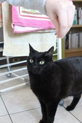 Fifille, Chat à adopter