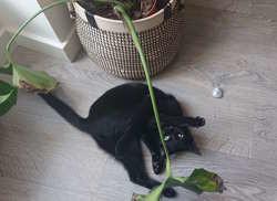 Salem, Chaton à adopter