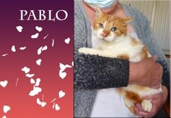 Pablo roux doux doux, Chat à adopter