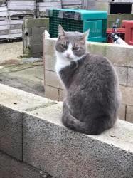 Hera, Chat européen à adopter