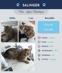 Salinger, Chat à adopter