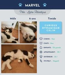 Marvel, Chat à adopter