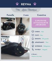 Reyna, Chat à adopter