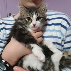 Aya, Chaton à adopter