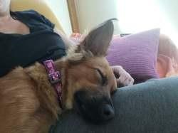 Minnie, Chiot à adopter