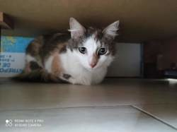 Bridget, Chat à adopter