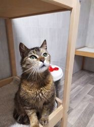Norah, Chat à adopter