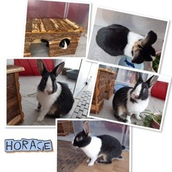 Horace, Animal à adopter