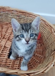 Perlin, Chaton à adopter