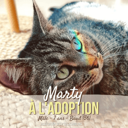 Marty, Chat à adopter