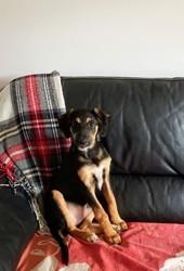 Loula (réservée), Chiot à adopter