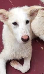 Alba (refugiados), Chiot à adopter