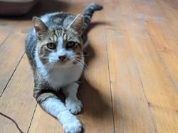 Malbo, Chat à adopter