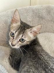 Baley, Chaton à adopter