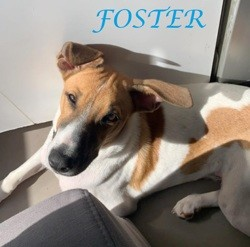 Foster, Chiot à adopter