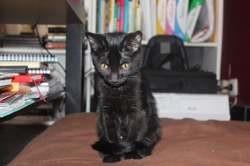 Raven, Chaton à adopter