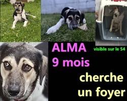 Alma, Chiot à adopter