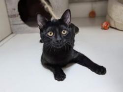 Steffi, Chaton à adopter