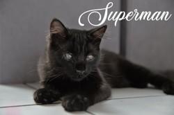 Superman, Chaton européen à adopter
