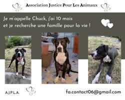 Chuck, Chiot à adopter