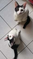 Bob et marso, Chaton à adopter