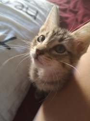 Orion, Chaton à adopter